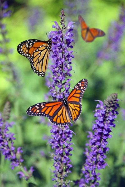 animal-beautiful-biology-bloom-675313