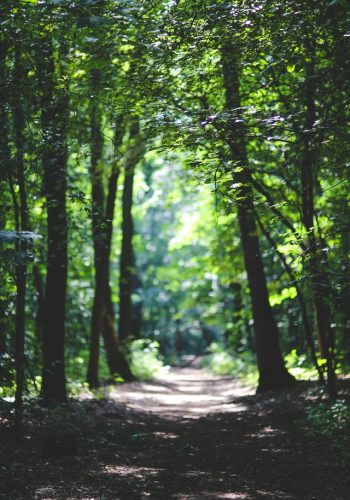 the-path-among-the-trees-6037